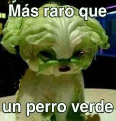 perro_verde