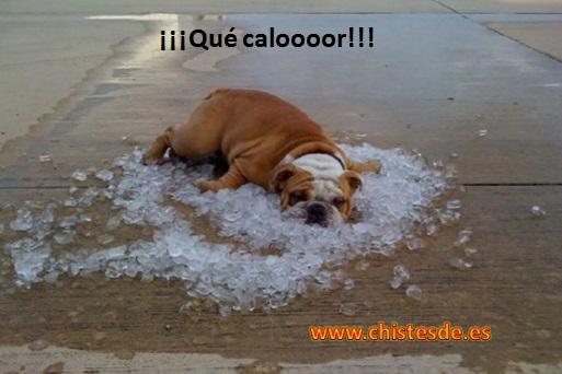 que_calor