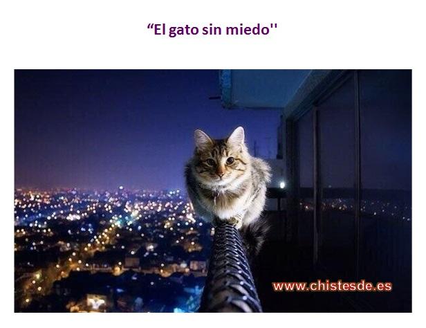 sin_miedo