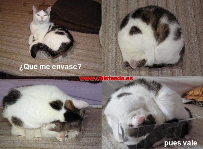 gato_envasado