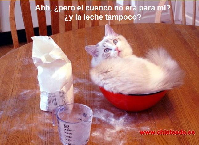 gato_leche