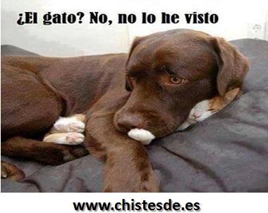 el_gato