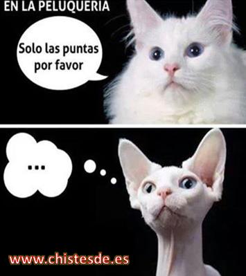en_la_peluqueria