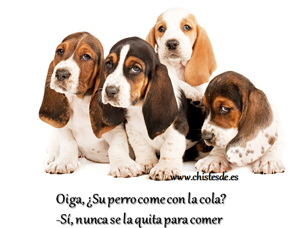 perro_cola_chistesde