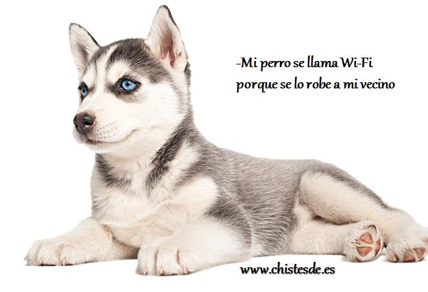 perro_wifi_chistesde