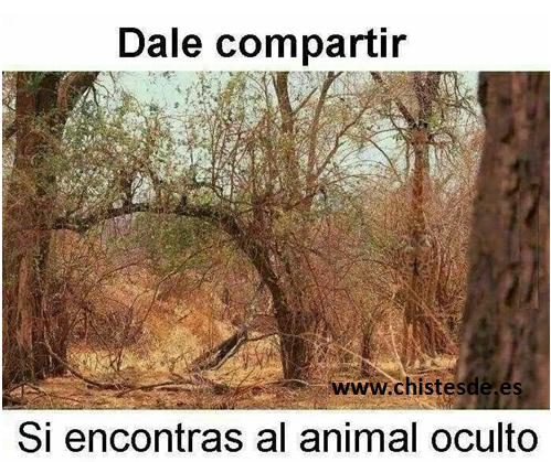 animal_oculto