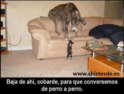 de_perro_a_perro