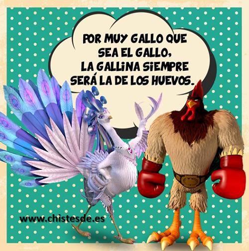 gallo_gallina