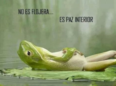 paz__interior